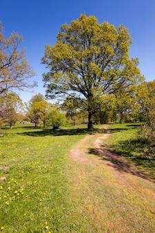 Landelijke weg - landelijke onverharde weg. wit-rusland. lente seizoen
