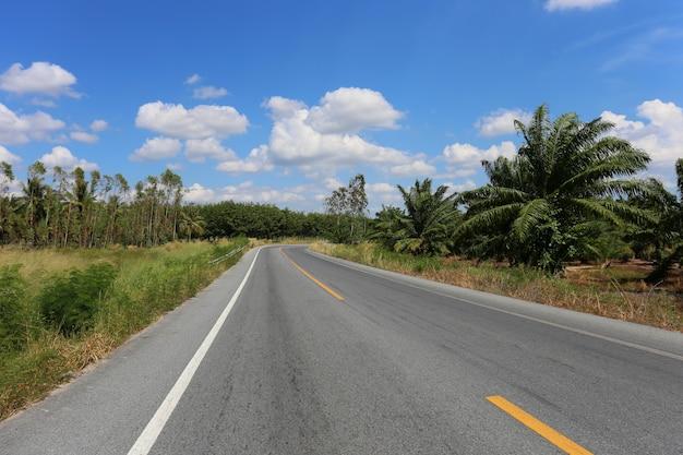 Landelijke weg met bomen aan beide kanten tijdens.