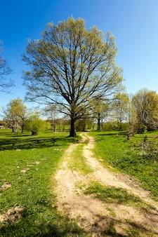 Landelijke weg - niet geasfalteerde landelijke weg waarlangs de boom groeit
