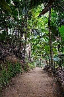 Landelijke weg op de grond midden in de tropische jungle, vallée de mai, praslin-eiland, seychellen