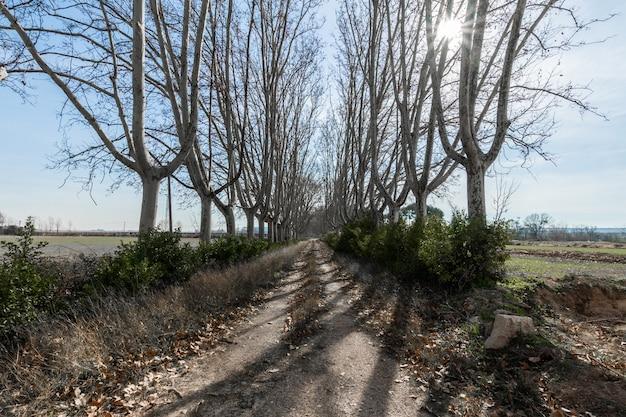 Landelijke weg tussen grote bomen met zon die onder de takken glanst