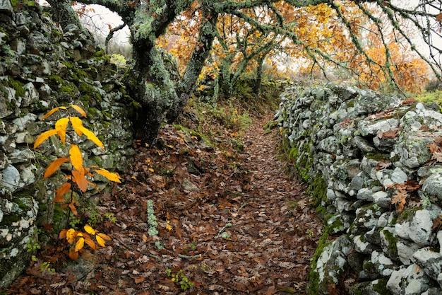 Landelijke weg tussen muren bij montanchez.