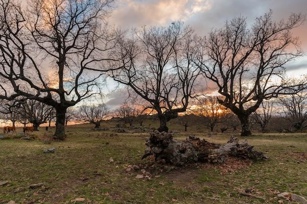 Landschap bij zonsondergang in de buurt van cabezabellosa. extremadura. spanje.