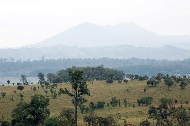Landschap, bos en bergketens voor de achtergrond.