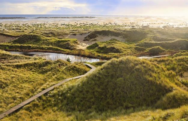 Landschap dat op een zonnige dag in duinen amrum, duitsland is ontsproten