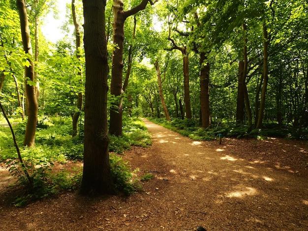 Landschap dat van de bomen van de smalle weglijn overdag is ontsproten