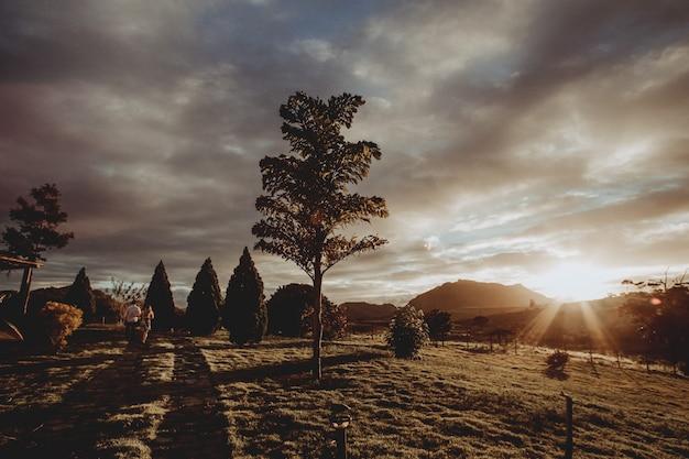 Landschap dat van een lange boom in een park tijdens zonsondergang is ontsproten