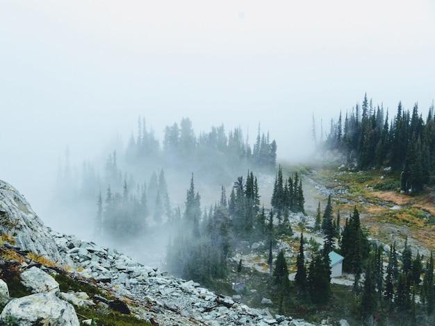 Landschap dat van een mistige, rotsachtige berg met groene pijnboombomen is ontsproten die op het groeien