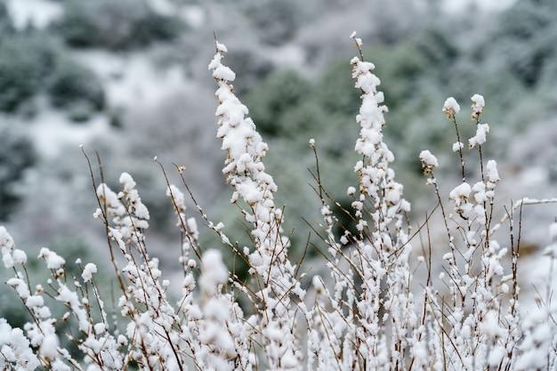Landschap en planten vol sneeuw in koude winterdag. spanje