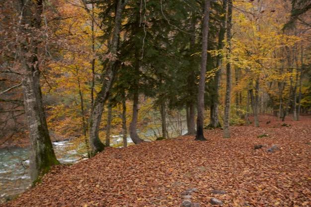 Landschap frisse lucht herfstblad vallen hoge bomen natuur. hoge kwaliteit foto