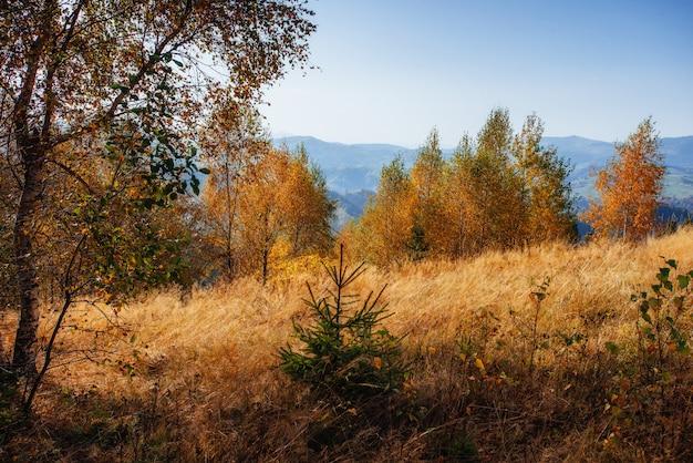 Landschap herfst park