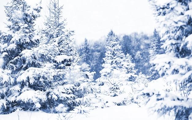 Landschap in de winter bewolkte dag van besneeuwde velden en bossen