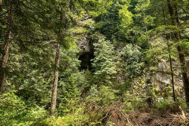 Landschap in vaser valley, bucovina, mocanita-stoomtrein, roemenië