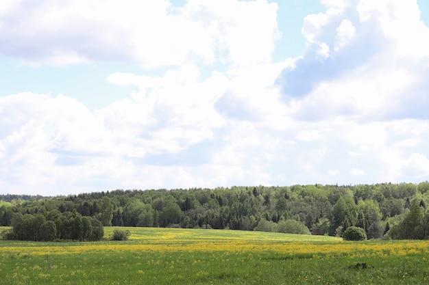 Landschap is zomer. groene bomen en gras in een landschap van het platteland. natuur zomerdag. bladeren op struiken.