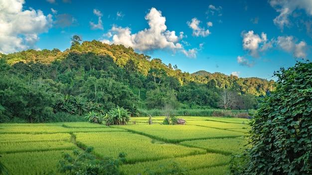 Landschap met bergzicht achtergrond