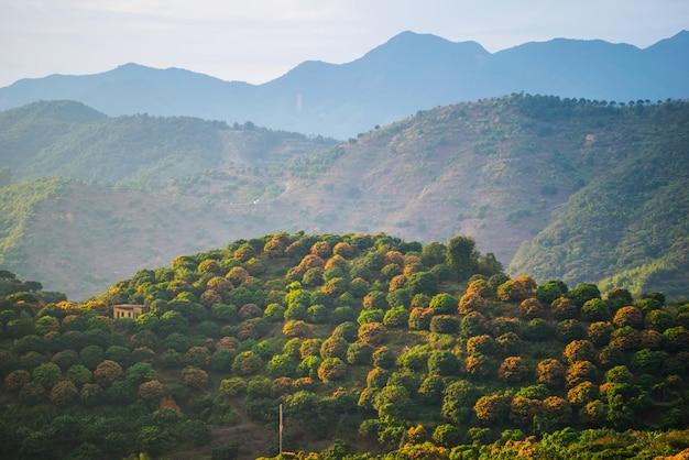 Landschap met bloeiende fruitbomen