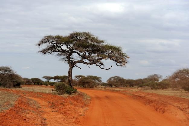 Landschap met boom in afrika