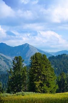 Landschap met bos bergen