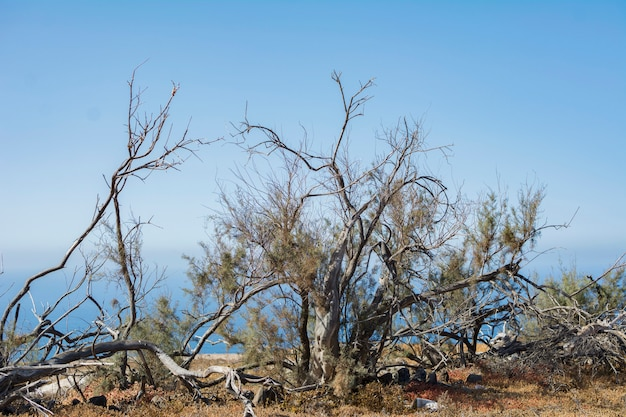 Landschap met droge boomstammen en een mooie blauwe hemel zonder wolken.
