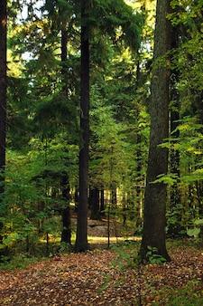 Landschap met een prachtig groen bos bedekt met gevallen gele bladeren.