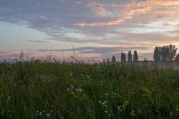 Landschap met een weide van gras tegen de achtergrond van een zonsopgang