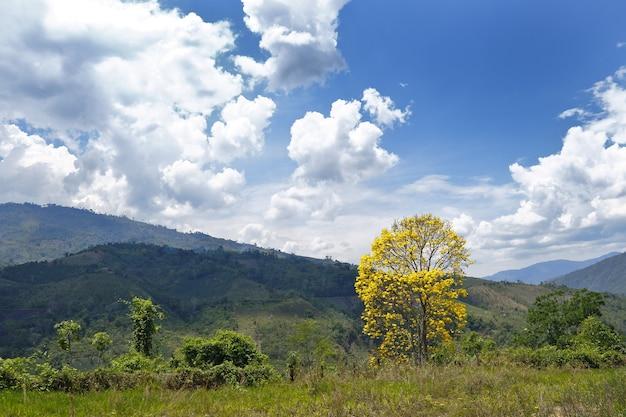 Landschap met gele boom in de jungle