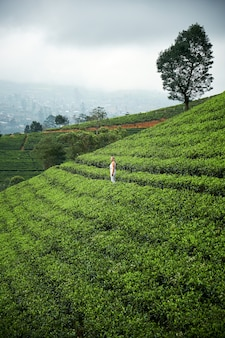 Landschap met groene gebieden van thee in sri lanka