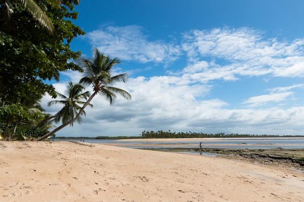 Landschap met kokospalm strand op het eiland boipeba bahia brazilië.