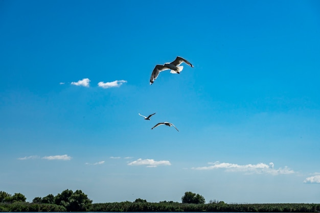 Landschap met meeuwen die over watergolven vliegen, gefotografeerd in de donaudelta, roemenië, zomerdag, 2021