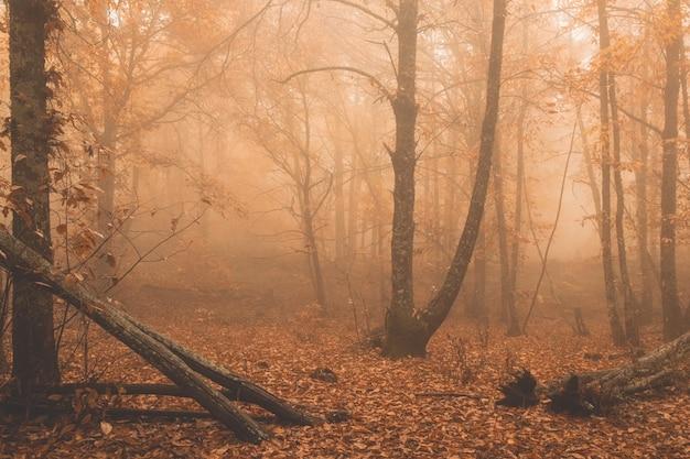 Landschap met mist in een kastanjebos in de buurt van montanchez extremadura spanje