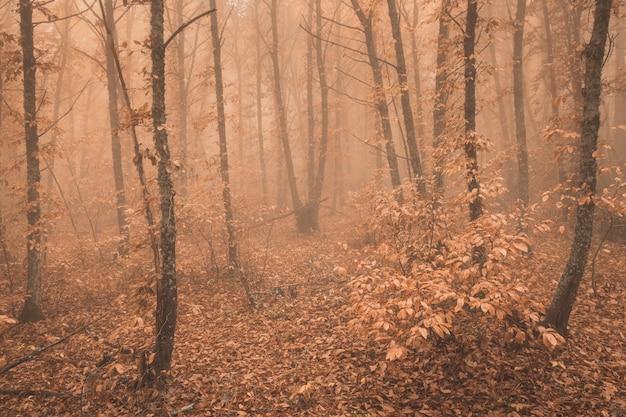 Landschap met mist in een kastanjebos nabij montanchez