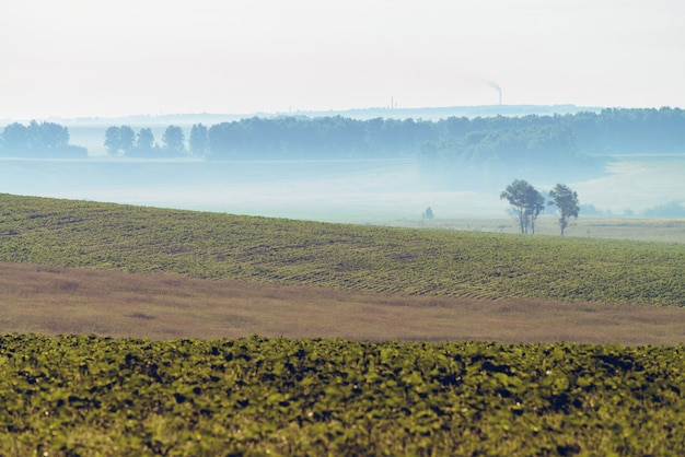 Landschap met mist op geploegd gebied