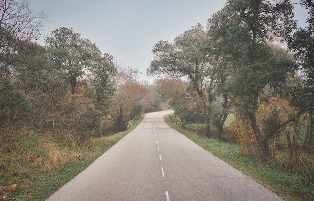 Landschap met parcours in een dromerig nevelwoud herfstkleuren in oktober natuurlijke achtergrond