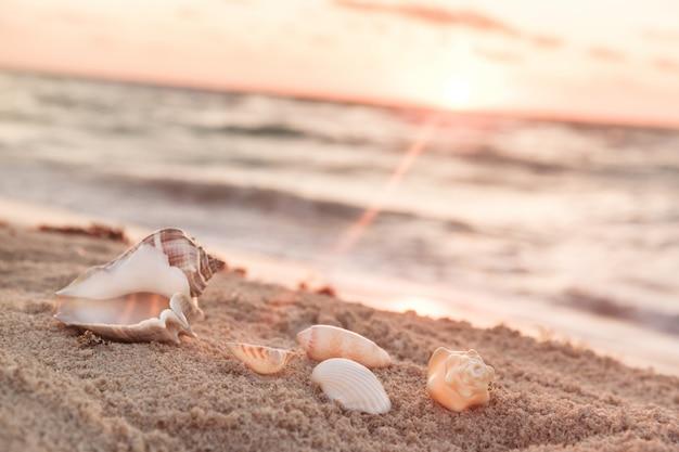 Landschap met schelpen op tropisch strand bij zonsopgang