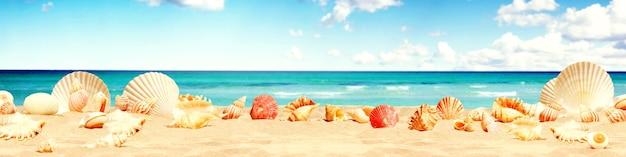 Landschap met schelpen op tropisch strand - zomervakantie.