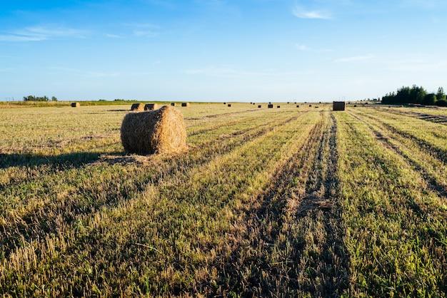 Landschap met strobalen op landbouwgebied.