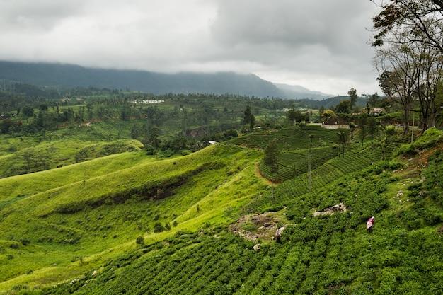Landschap met theeaanplantingen in hooglanden, sri lanka.