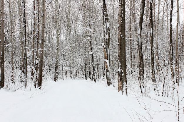 Landschap met uitzicht op het met sneeuw bedekte winterbos