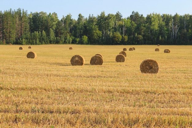 Landschap met uitzicht op het veld en daarop geoogste balen stro
