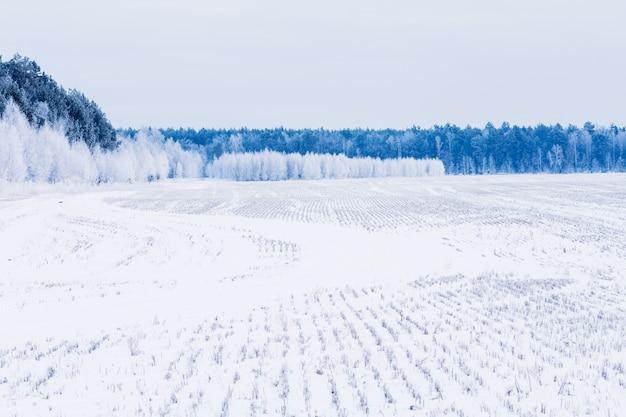 Landschap met veld en bos bedekt met sneeuw. winter