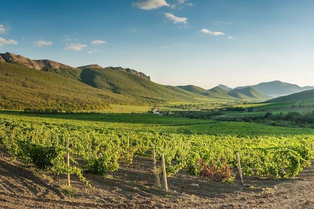 Landschap met wijngaarden in de bergen