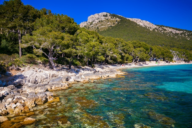Landschap op het strand cala pi de la posada in mallorca