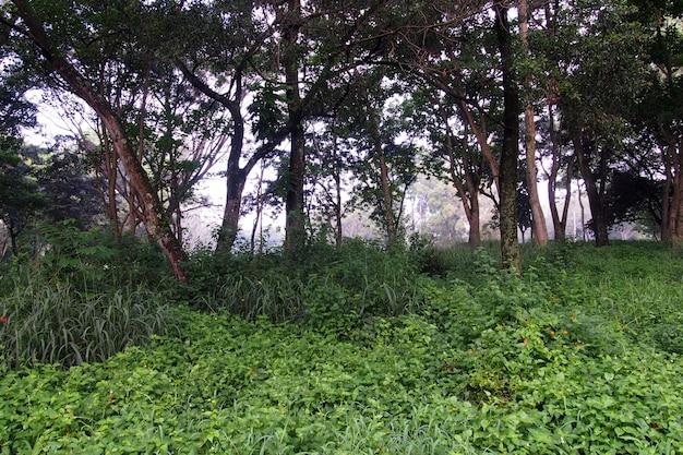 Landschap tropisch regenwoud van de stad.
