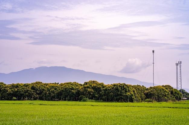 Landschap van biologische longan-boerderij tegen telecommunicatieantenne en berg