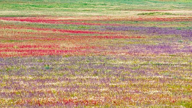 Landschap van bloemen met de kleuren van de lente in de natuur