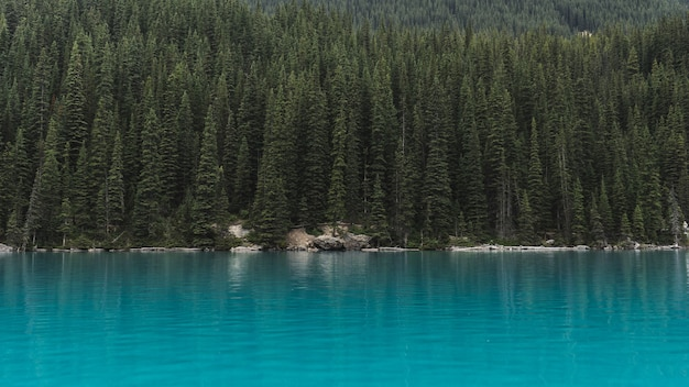 Landschap van bomen dichtbij watermassa