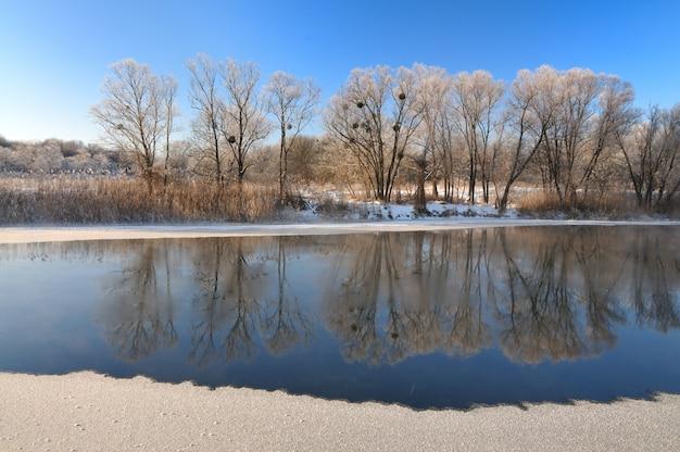 Landschap van bomen die aan de oever van een rivier groeien