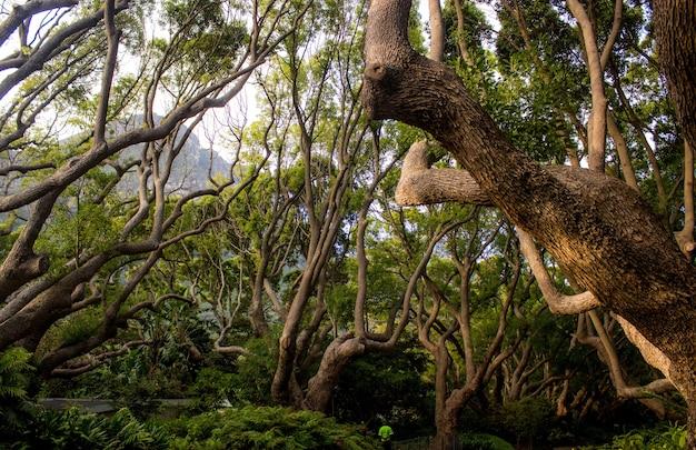 Landschap van bomen en struiken in een jungle overdag - perfect voor natuurlijke concepten
