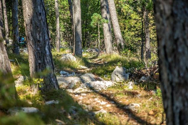 Landschap van bomen, rotsen en grassen in slovenië