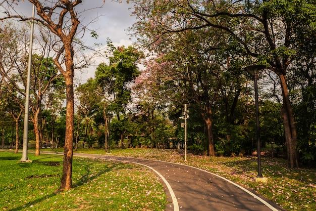 Landschap van boom in het park